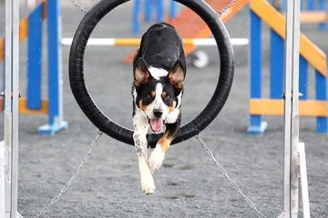 Agility for beginners